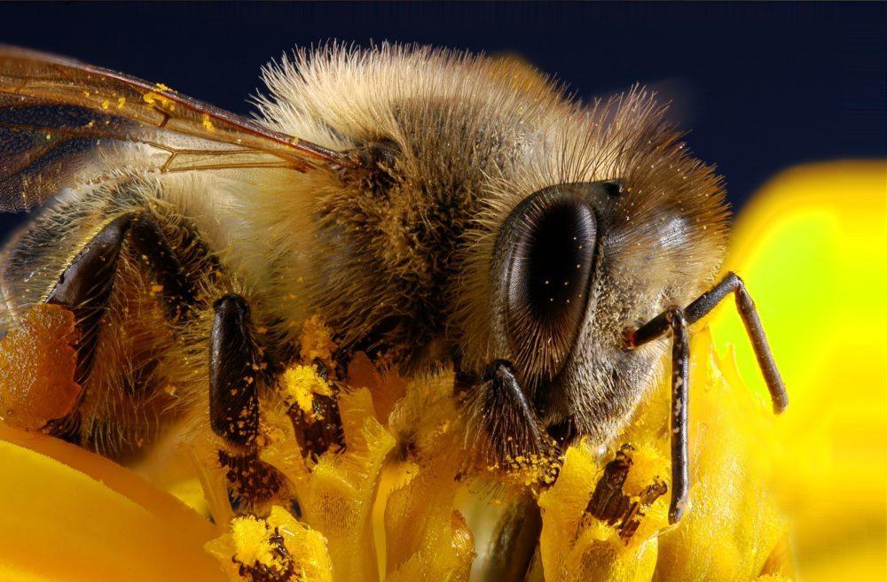apiculture en biodynamie