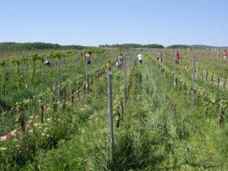 recherche en viticulture biodynamique Georg meissner geisenheim