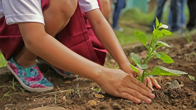 care for biodynamic plants