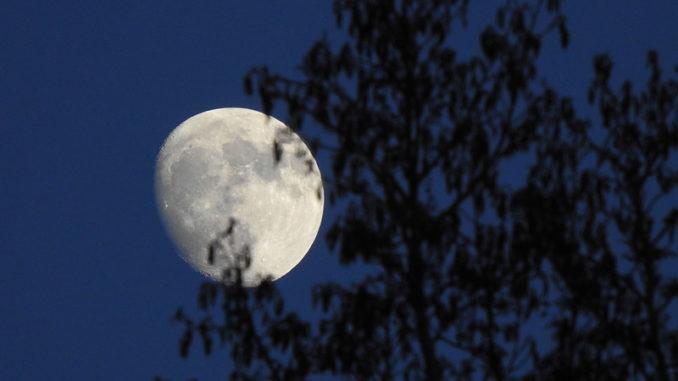 plante et lune biodynamie