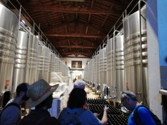 vin et viticulture en biodynamie